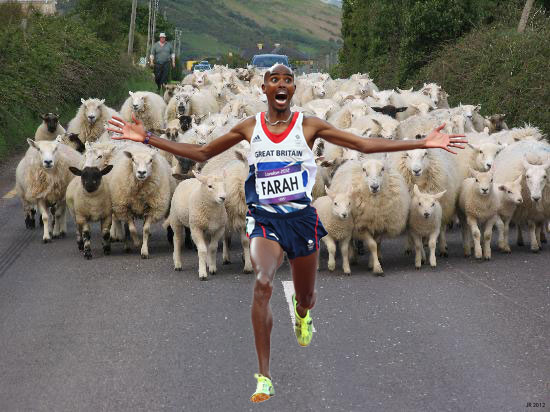 Mo Farah Runs Away From Things - Sheep