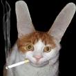 bunnycat.jpg