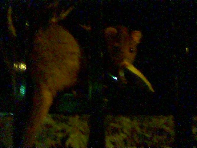 Possum2.jpg