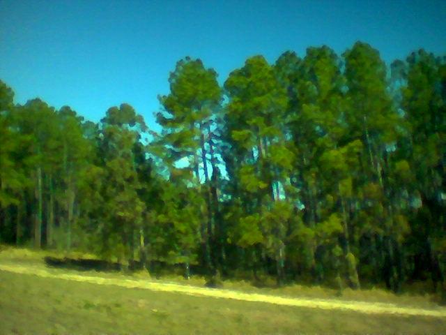 Trees_Gympie_RBch3.jpg