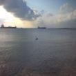 Botany_Bay_pelican.jpg