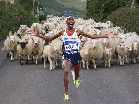 Mo Farah Runs Away From Things - Sheep
